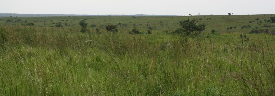 A small piece of the threatened land